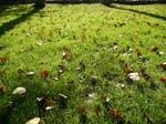 芝生と落ち葉.JPG